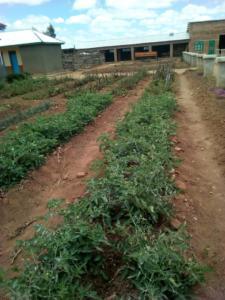 Family Garden Plot